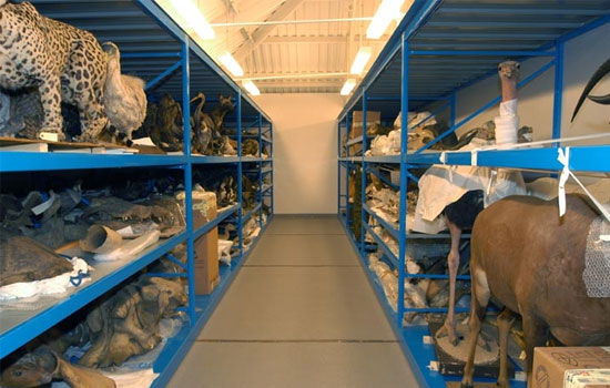 Museum Collection Storage